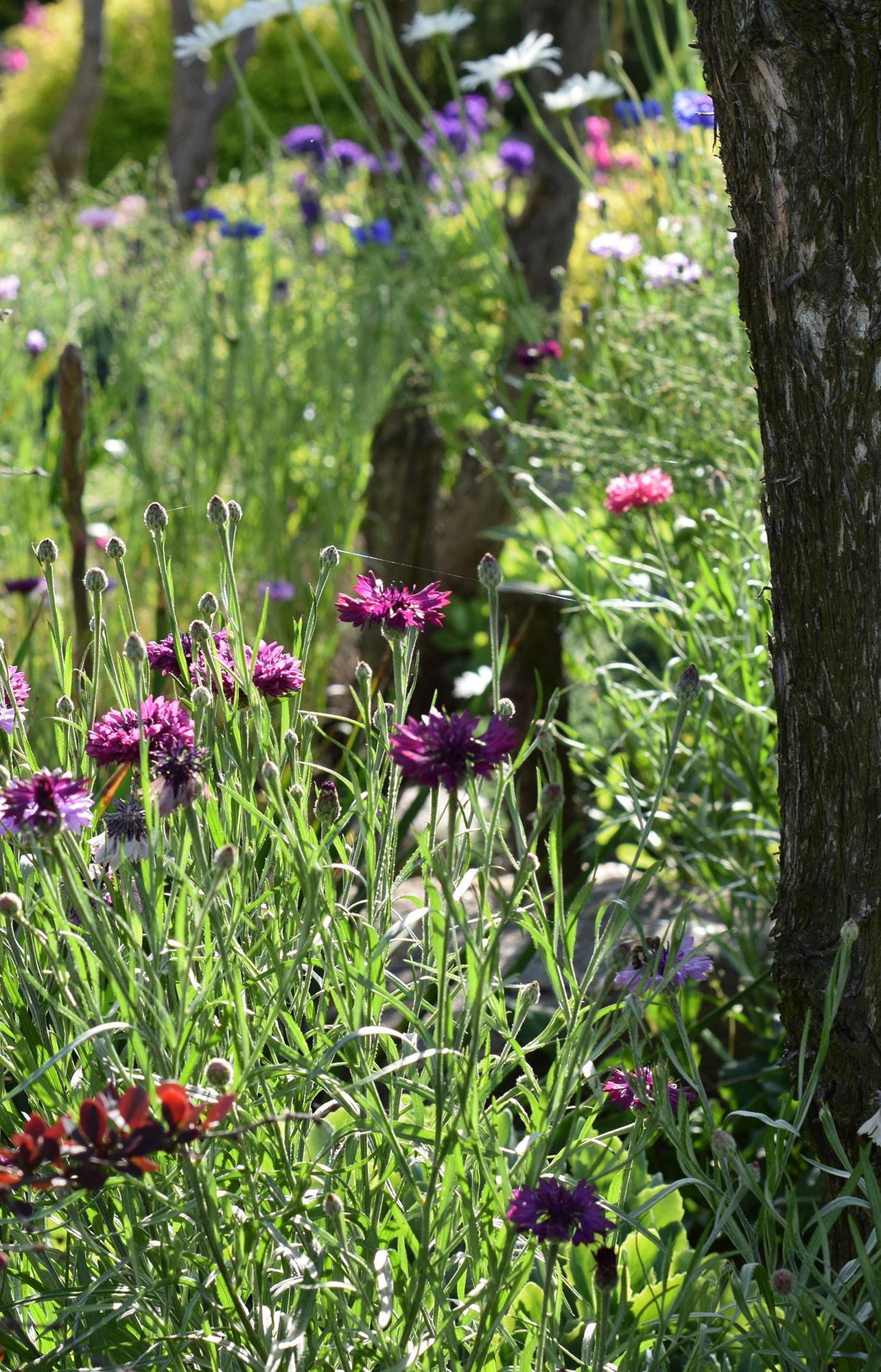"""Konkurs """"Wiosna w ogrodzie"""" rozstrzygnięty!"""
